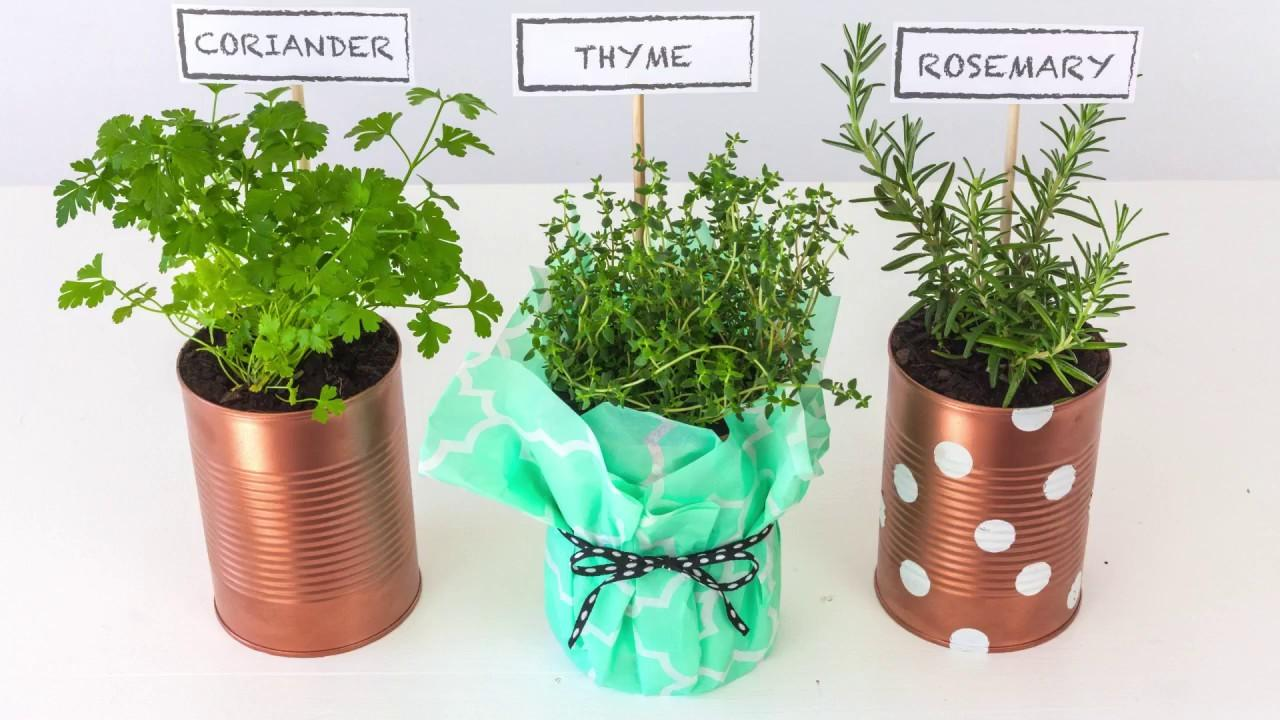 Upcycle Tin Cans Into Herb Planters