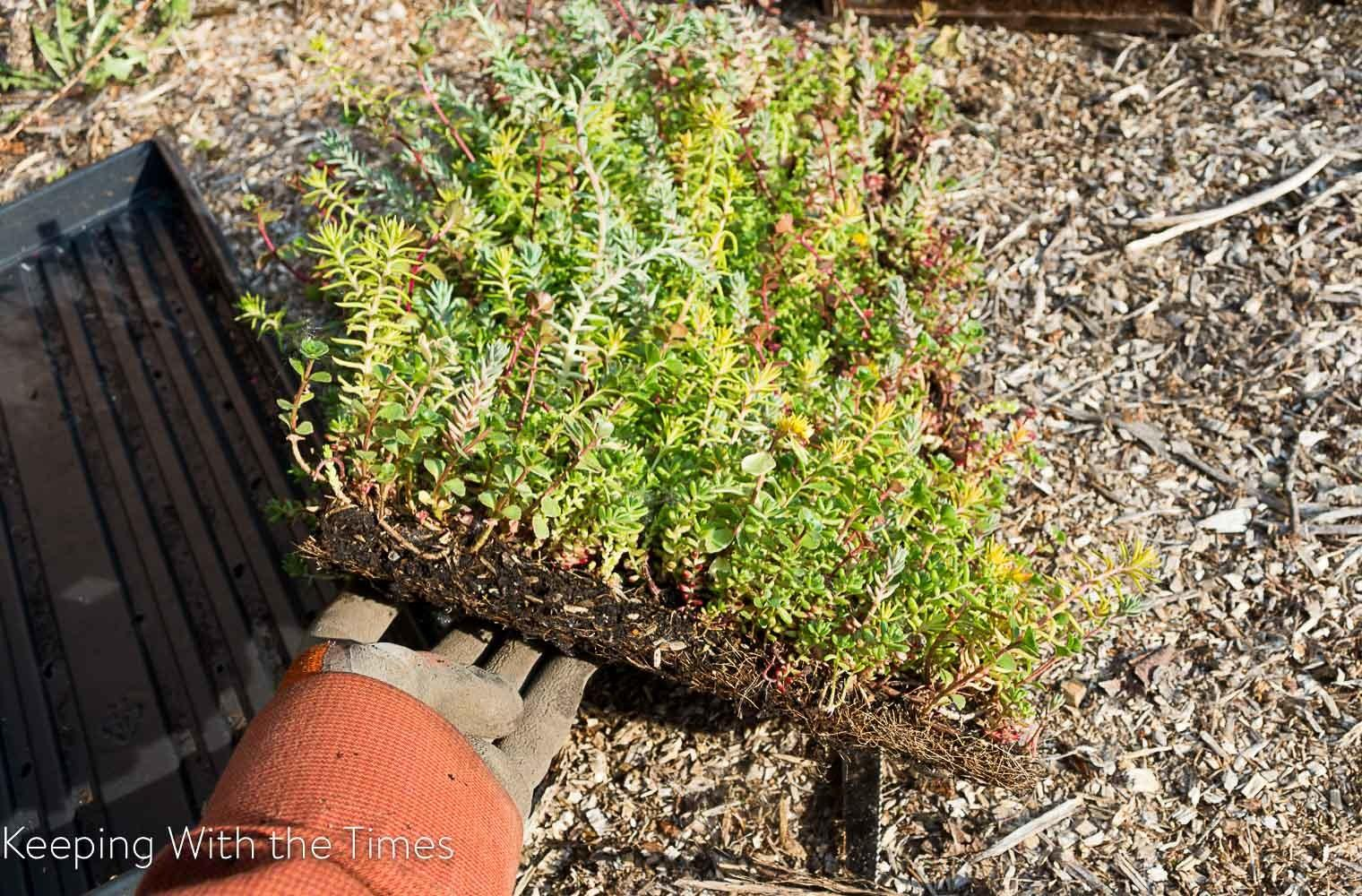 Upcycled Toolbox Planter Keeping Times