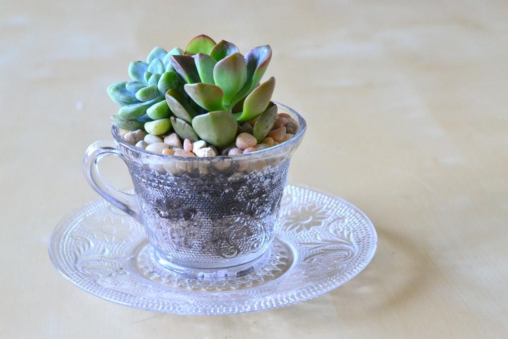 Vintage Glass Saucer Republic Succulents