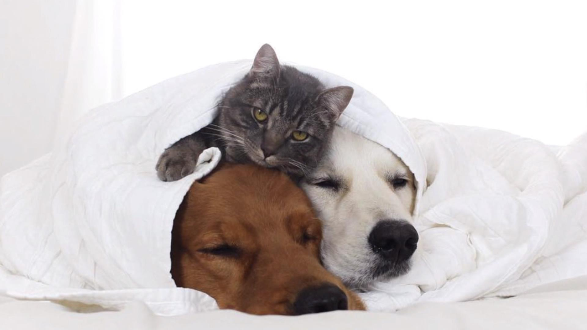 Watch These Dogs Cat Snuggle Their Nap Today