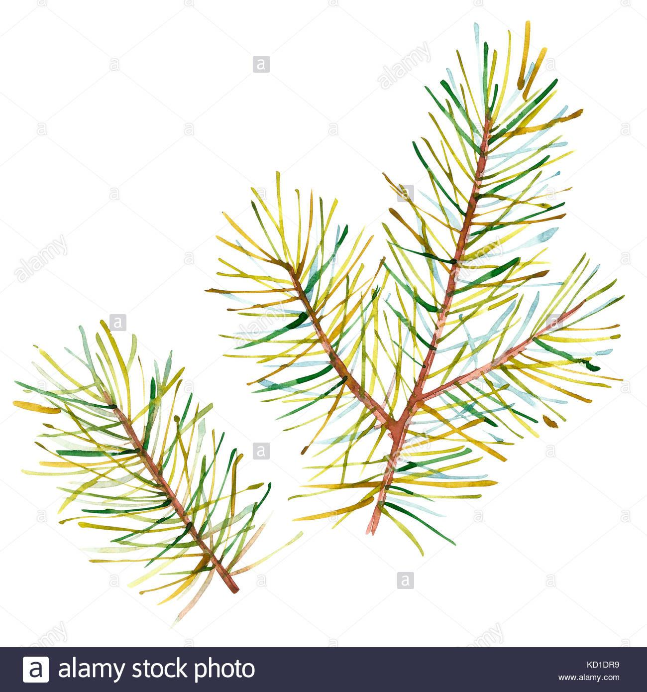 Watercolor Christmas Tree Branches Hand Painted Texture