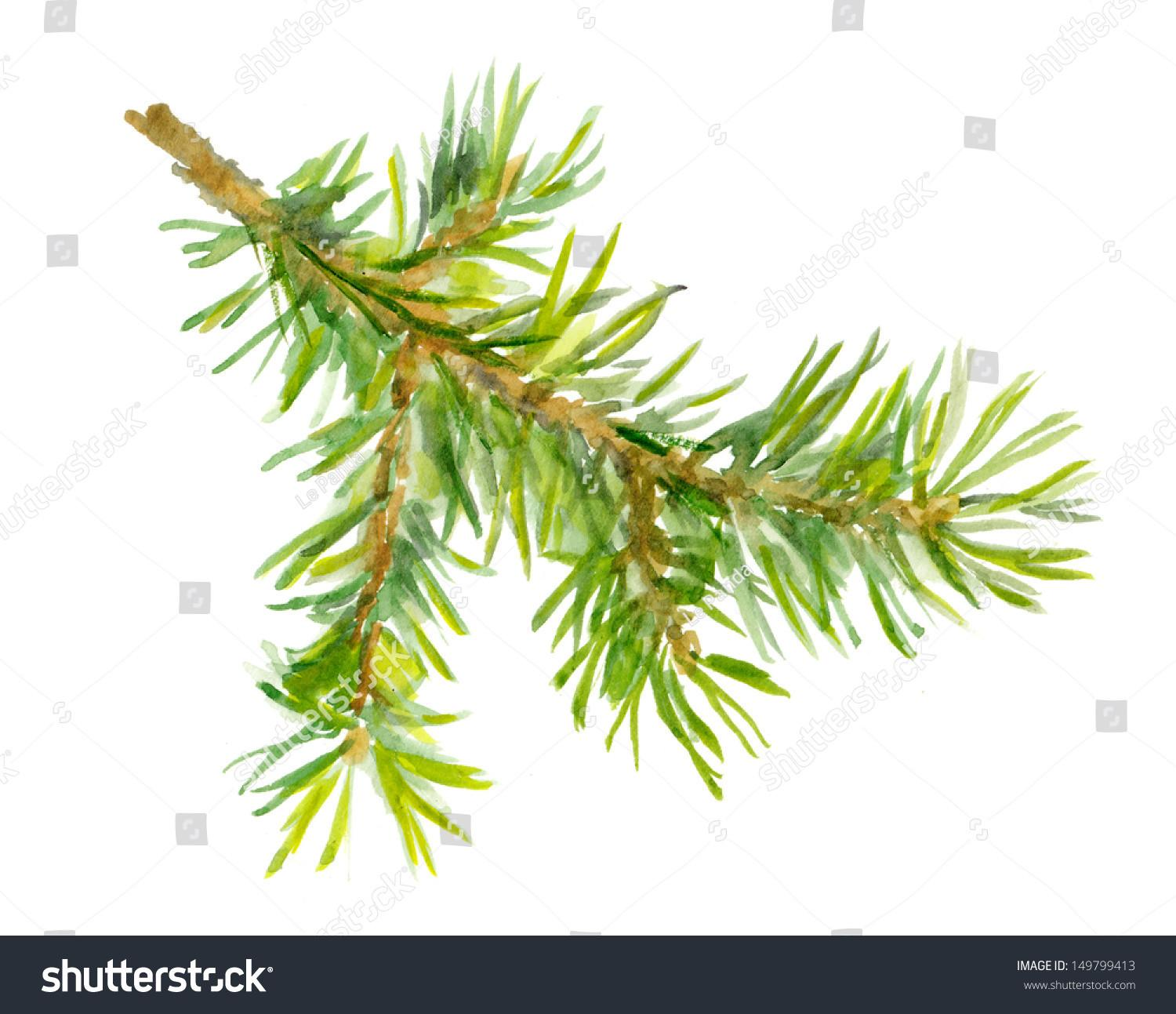 Watercolor Painted Fir Tree Branch Stock Illustration