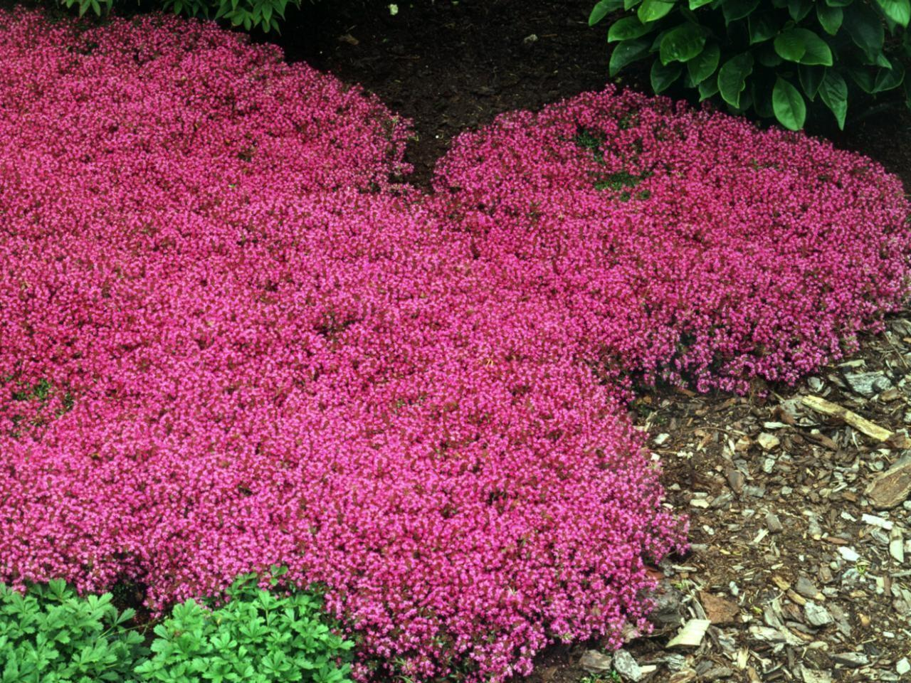 Which Plants Lawn Alternative Diy Landscaping
