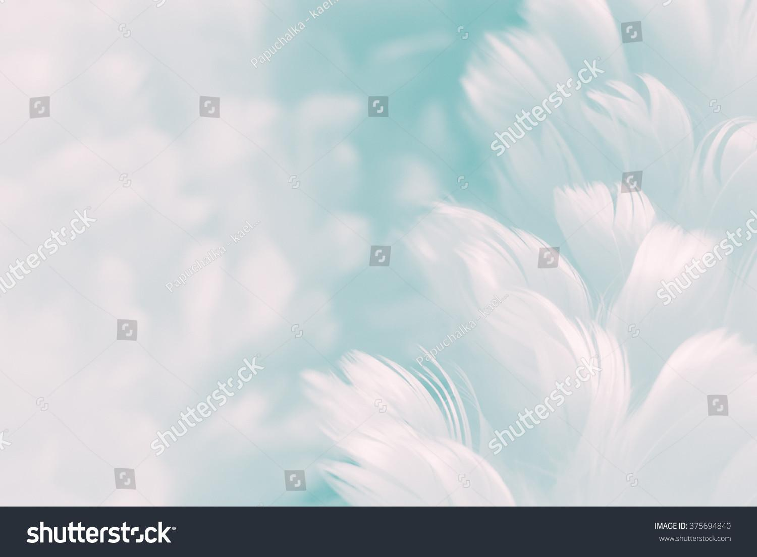 White Fluffy Feathers Pale Teal Stock
