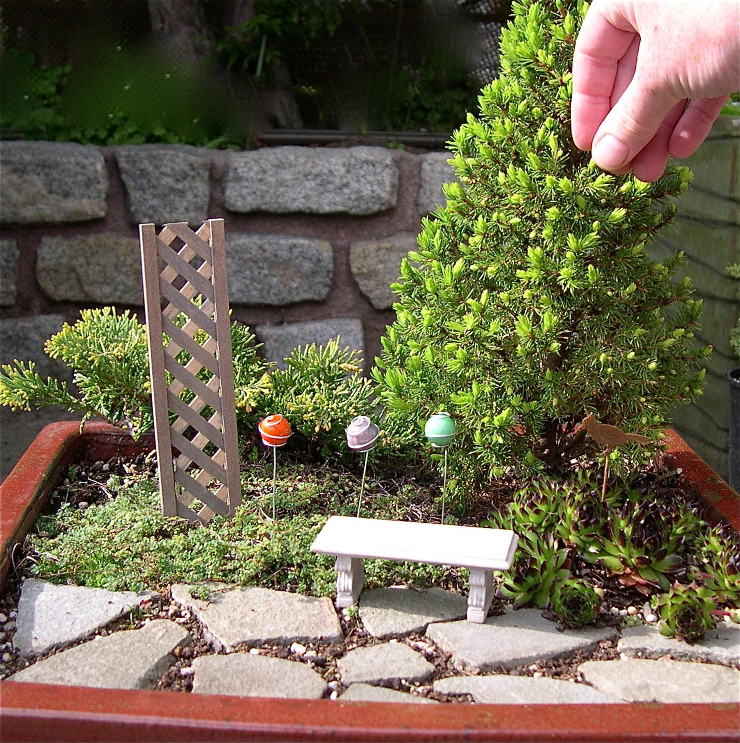 Why Conifers Make Great Mini Garden Trees