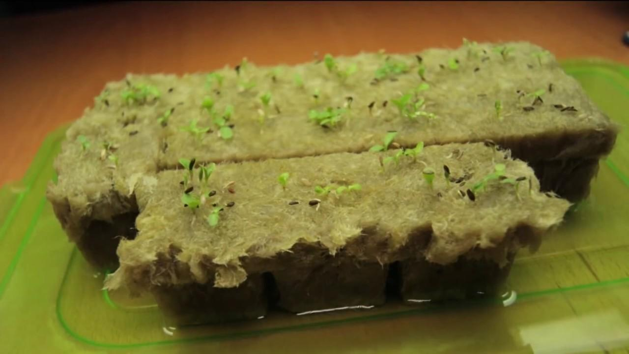 Why Rockwool Stonewool Grow Cubes Hydroponic