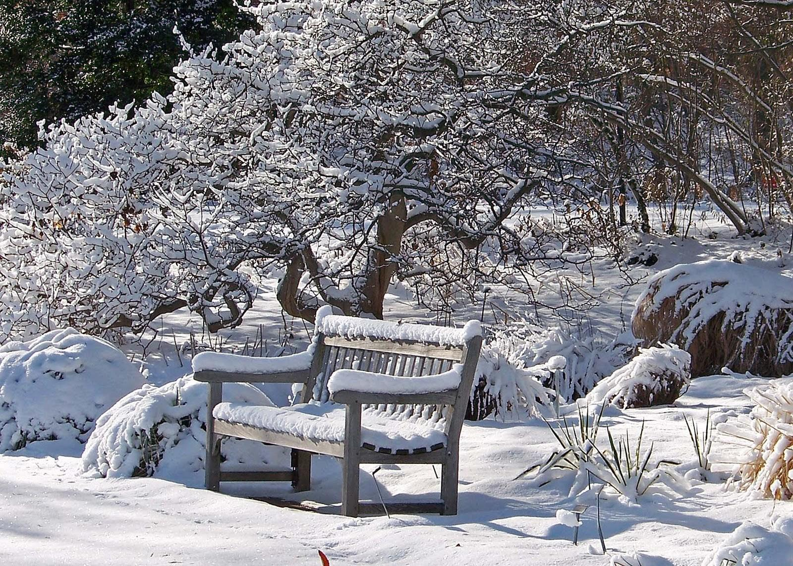 Winter Landscaping Tips Westwood Ground Maintenance