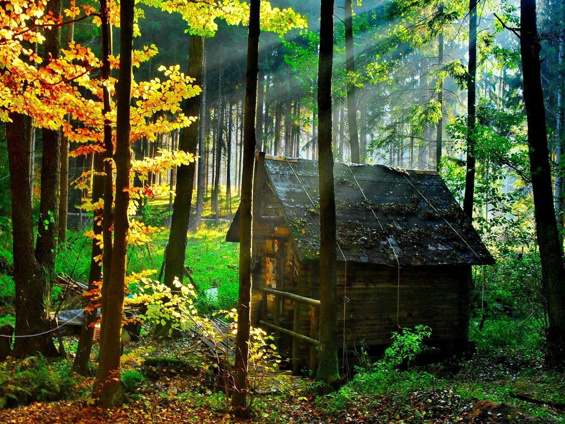 Wooden House Forest Cool