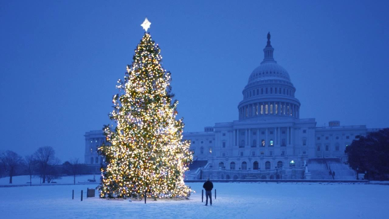 World Best Most Beautiful Christmas Trees